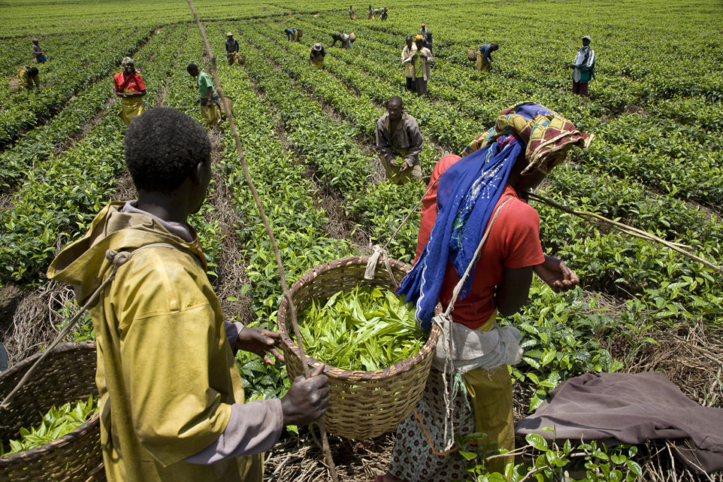 Digital-Solution-for-IoT-Sensors-in-Agriculture-for-farmers-in-Rwanda-Africa