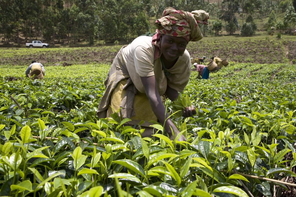 For-the-digital-solution-Smart-Irrigation-we-partnered-up-with-the-Rwandan-Agricultural-Board