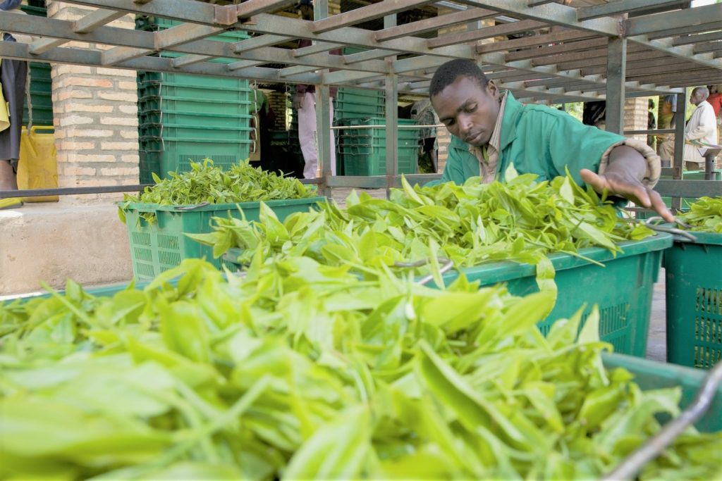 Smart-Agriculture-digital-solutions-are-developed-with-local-IT-companies-and-start-ups-in-Kigali-Rwanda-Africa